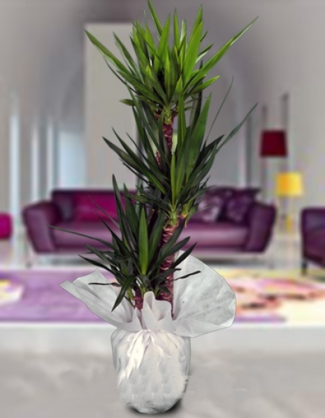 Salon bitkileri i ek i salon bitkileri i ek g nder for Salon cicek turleri